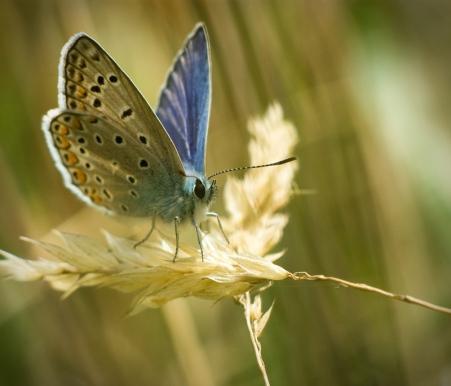 Y'é suis une magnifique papillionne !