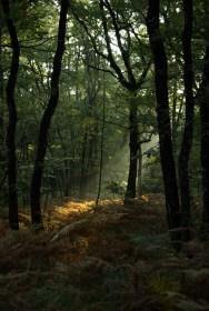 Promenons-nous dans les bois...